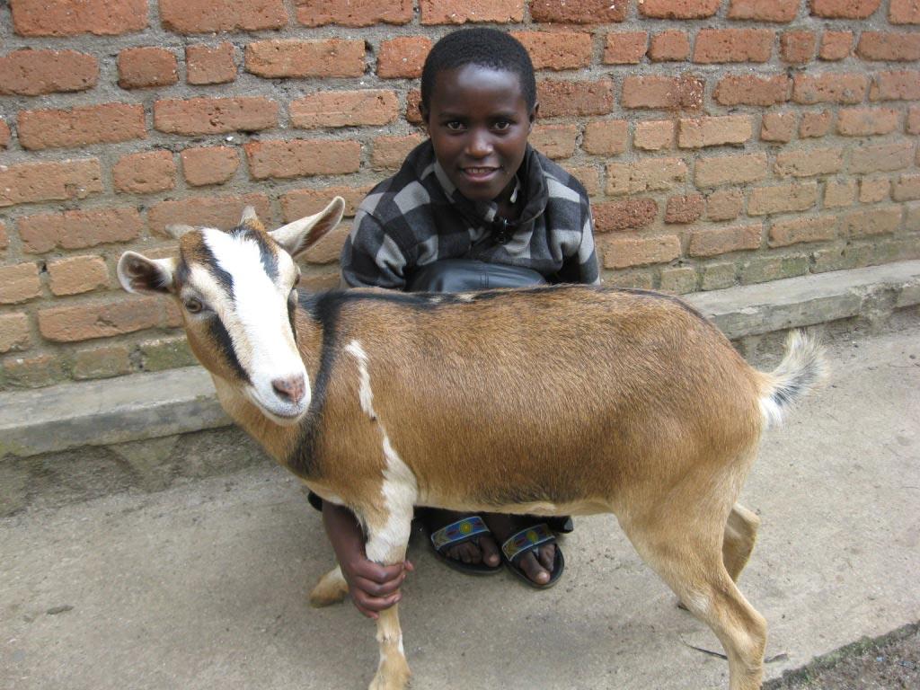 Don de chèvre à un orphelin du Rwanda