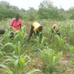Travail des enfants au champs au Burkina Faso