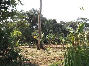 Champ défriché par un paysan à Kabweke, Nord Kivu en RD du Congo