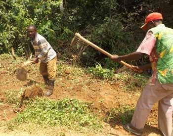 Travaux de défrichage à Kabweke, RD du Congo