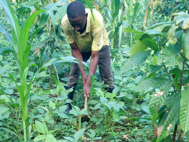 Installation de jeunes démobilisés sur des terres agricoles