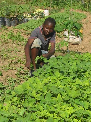 Projet agropastoral de maraichage et production agricole au Centre Bumi de Karavia, RD du Congo
