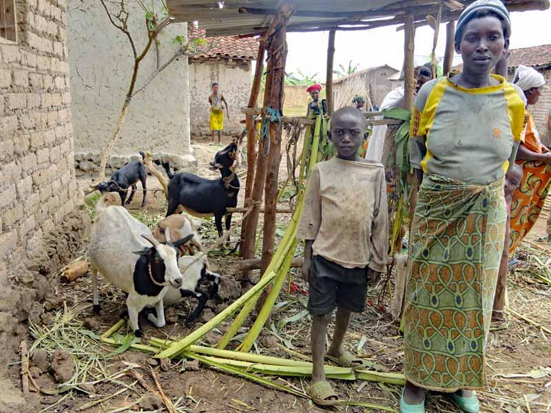 Le petit élevage de chèvres d'une famille très vulnérable de Basa au Rwanda