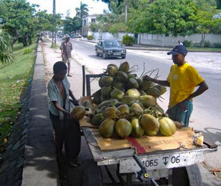 Vendeur ambulant de noix de coco à Madagascar