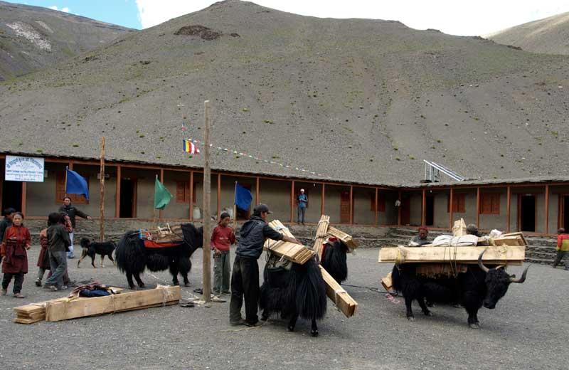 Arrivée de la caravane de yacks transportant le matériel scolaire et les bois de construction dans le Haut Dolpo au Népal